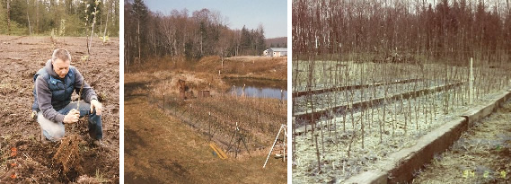 Original orchard pictures